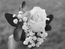Classic rose buttonhole. Bee.happyphotography