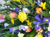 lovely spring colours