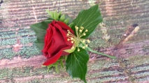 Red Rose button hole